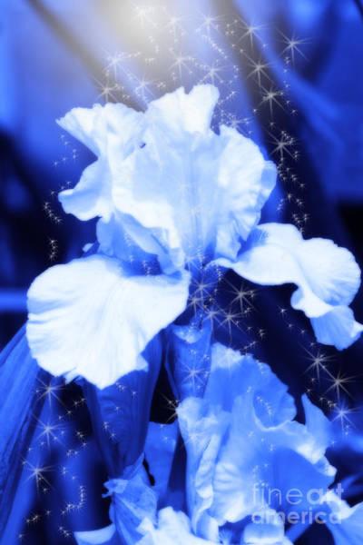 Digital Art - Magic Blue Iris  by Cathy Beharriell