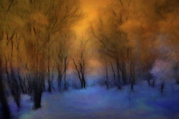 Photograph - Magic Forest by Andrea Kollo