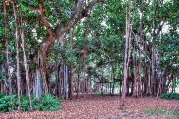 Photograph - Magic Forest by Sam Davis Johnson