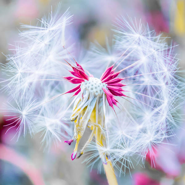 Photograph - Magic In Pink Square by Parker Cunningham