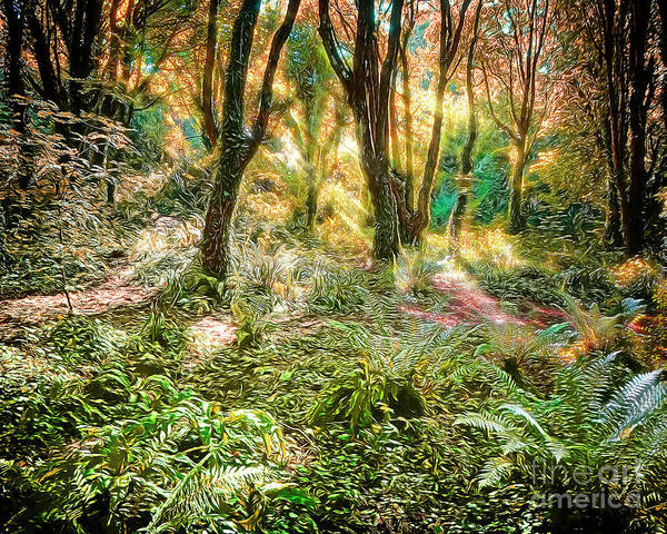 Photograph - Magic In The Woods by Edmund Nagele