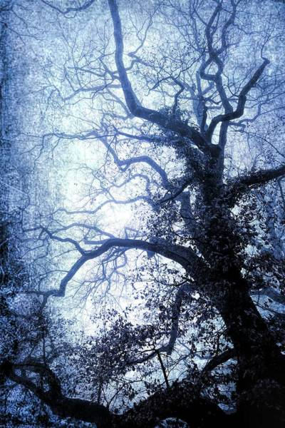 Wall Art - Photograph - Magic Mystical Tree by Antique Images