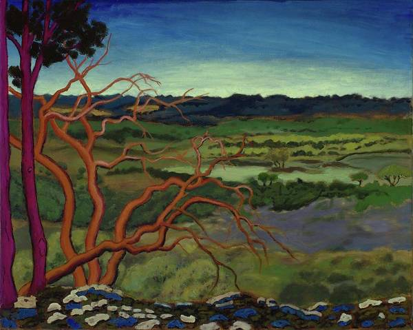 Painting - Magic Trees Of Wimberley by Vera Smith