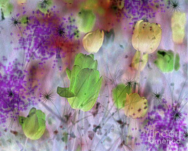 Photograph - Magic Tulips And Purple Brush Effect by Silva Wischeropp