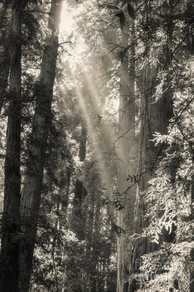 Photograph - Magical Forest by Ana V Ramirez