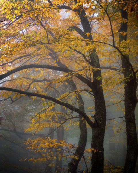 Photograph - Magical Forest Blue Ridge Parkway by Mike Koenig