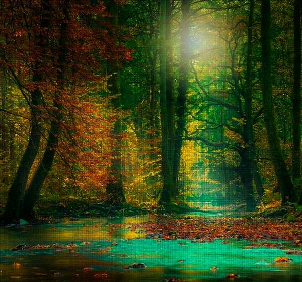 Digital Art - Magical Forest by Digital Art Cafe