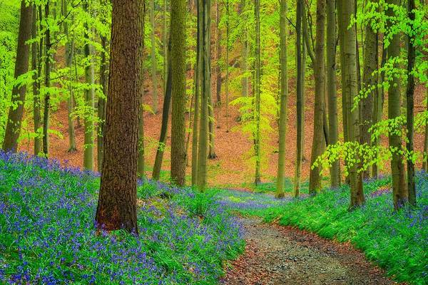 Wall Art - Photograph - Magical Forest by Maciej Markiewicz