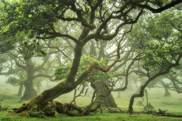 Wall Art - Photograph - Magical Forest by Martin Podt