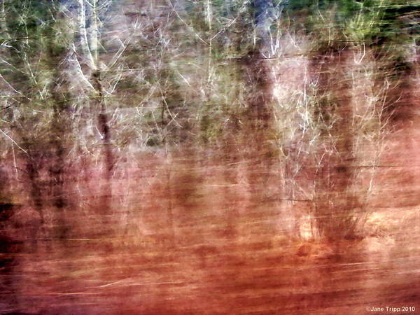 Real Ghosts Wall Art - Photograph - Magical Gathering  by Jane Tripp