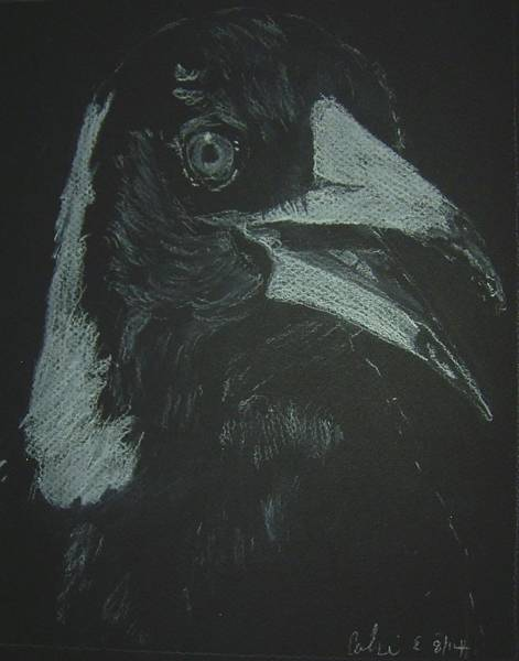Magpies Drawing - Magnet by Caroline Everett