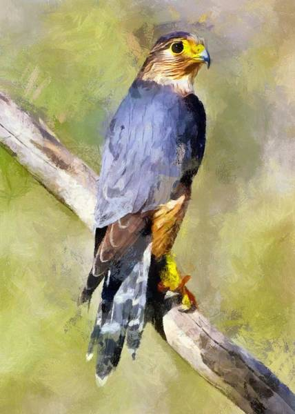 Digital Art - Magnificent Merlin by Charmaine Zoe