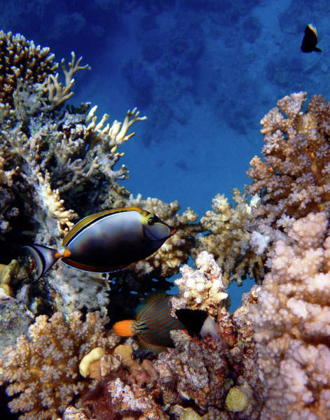 Photograph - Magnificent Red Sea World by Johanna Hurmerinta