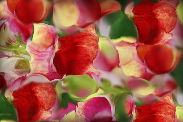 Snap Dragons Wall Art - Photograph - Magnified Flower Abstract by Kathy M Krause