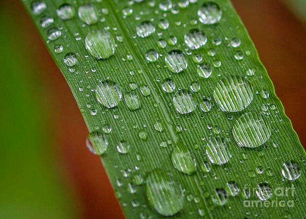 Photograph - Magnifying Dew Drops       by Tom Claud