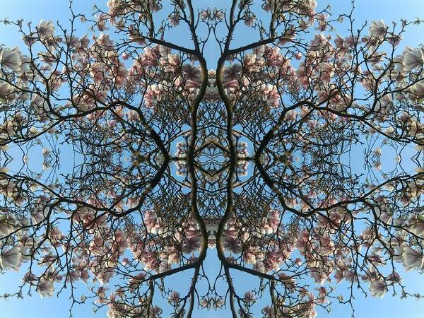 Photograph - Magnolia Angel by Julia Woodman