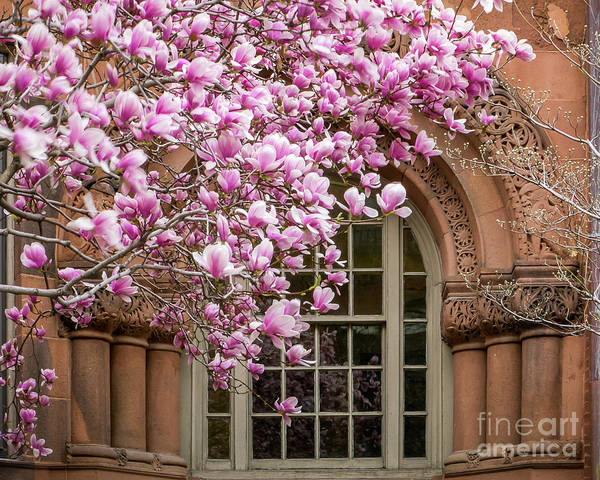 Photograph - Magnolia Arch by Susan Cole Kelly