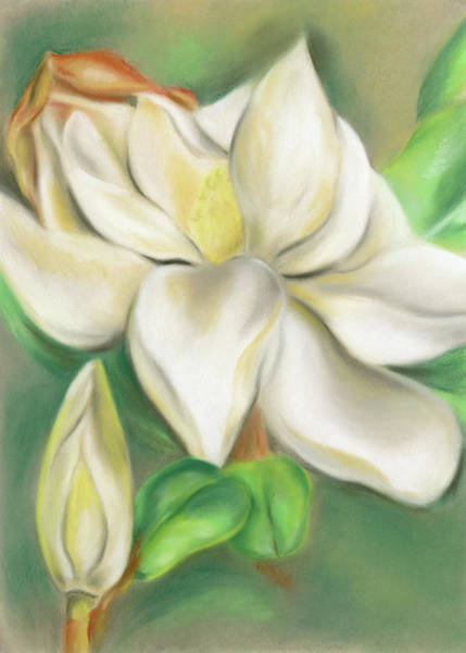 Pastel - Magnolia Blossom And Bud by MM Anderson