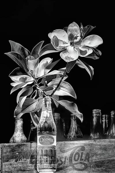 Photograph - Magnolia Cheerwine Still Life Black And White by JC Findley