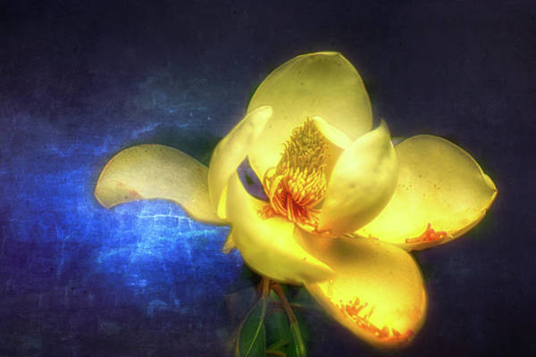 Wall Art - Photograph - Magnolia by Ches Black