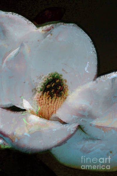 Photograph - Magnolia by Donna Bentley
