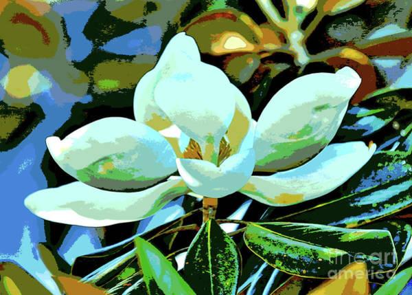 Photograph - Magnolia Dream by Carol Groenen