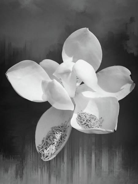 Photograph - Magnolia En Noir by Alice Gipson