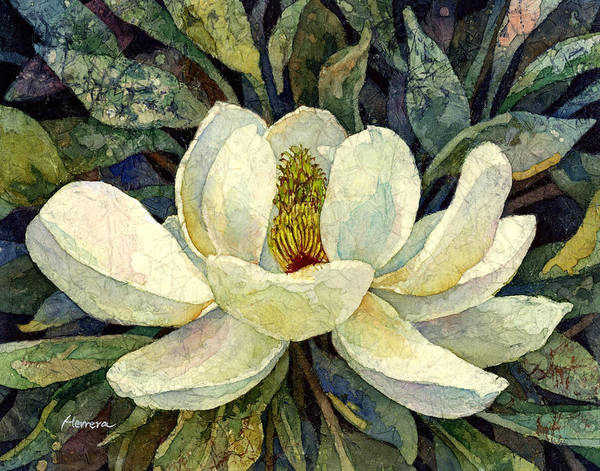 Blooming Wall Art - Painting - Magnolia Grandiflora by Hailey E Herrera