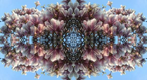 Photograph - Magnolia Magic by Julia Woodman