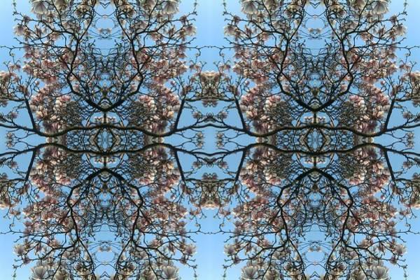 Photograph - Magnolia Octet by Julia Woodman