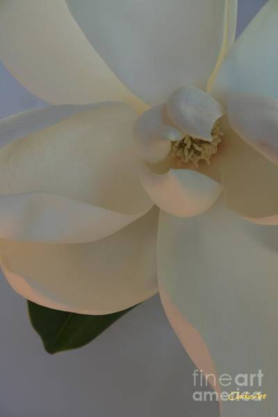 Photograph - Moody Magnolia  by Jean Clarke