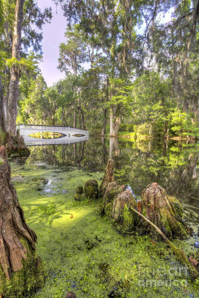 Photograph - Magnolia Plantation Bridge Cypress Garden by Dustin K Ryan