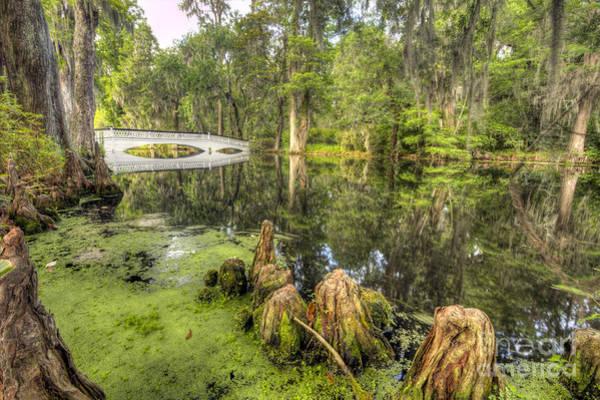 Photograph - Magnolia Plantation Cypress Garden by Dustin K Ryan