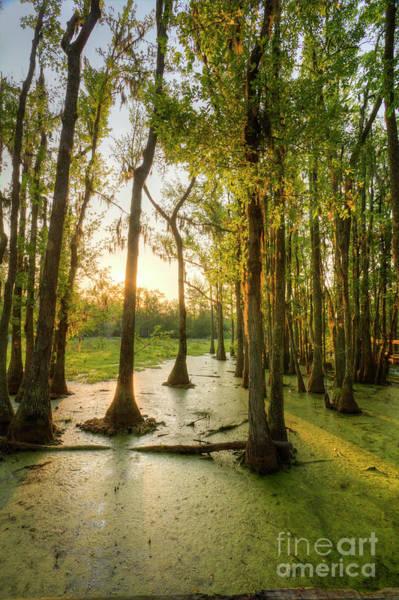Photograph - Magnolia Plantation Cypress Swamp by Dustin K Ryan