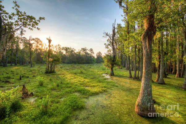 Photograph - Magnolia Plantation Cypress Swamp Sunrise by Dustin K Ryan