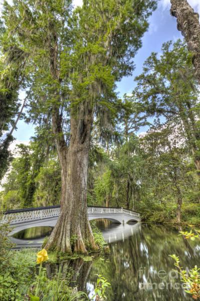 Cypress Gardens Photograph - Magnolia Plantation Cypress Tree by Dustin K Ryan