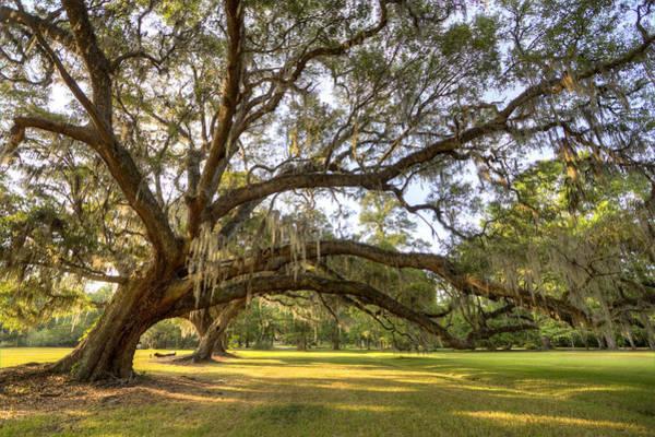 Photograph - Magnolia Plantation Live Oak Sunrise by Dustin K Ryan