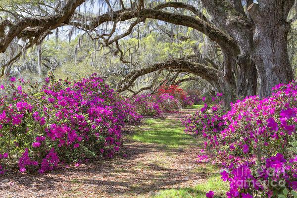 Photograph - Magnolia Plantation by Richard Sandford