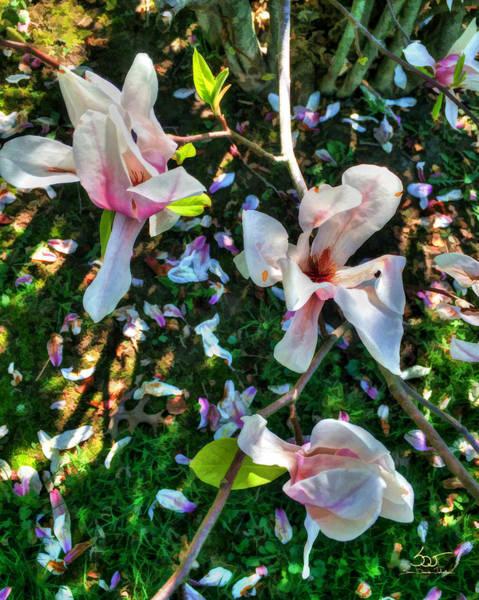 Photograph - Magnolia by Sam Davis Johnson