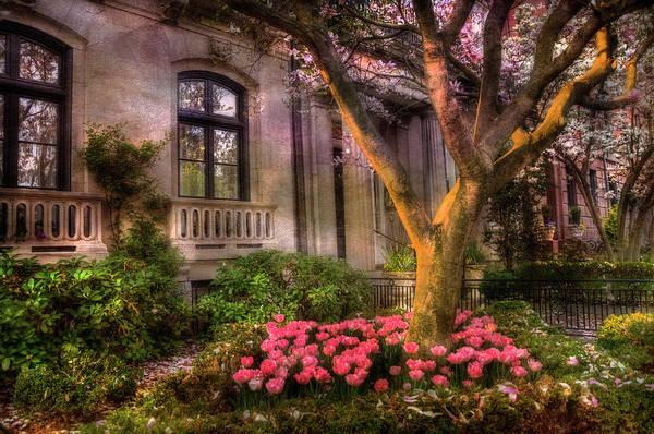 Photograph - Magnolia Trees In Back Bay - Boston by Joann Vitali