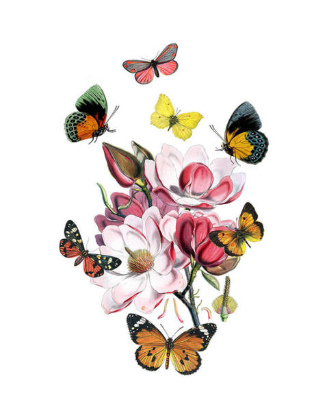 Seasonal Wall Art - Digital Art - Magnolia With Butterflies by Madame Memento