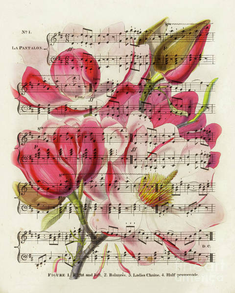 Wall Art - Mixed Media - Magnolias And Music Sheet by Delphimages Photo Creations
