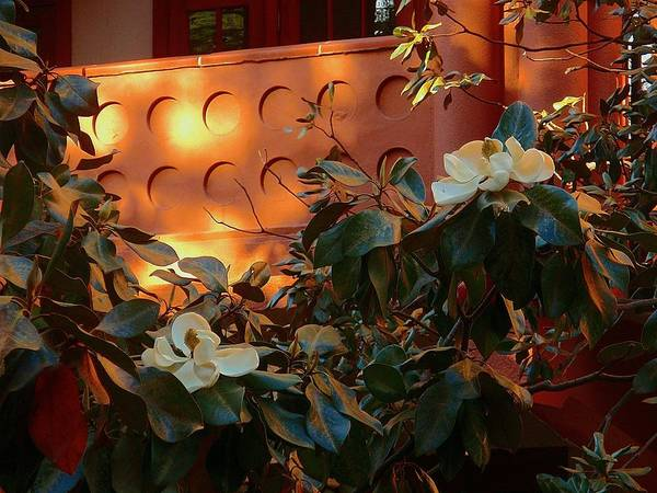 Photograph - Magnolias In Morning Light by Beth Akerman