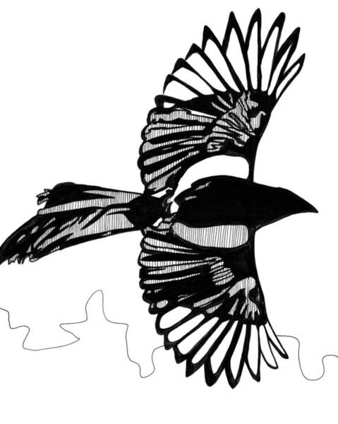 Magpies Drawing - Magpie In Flight by Matthew Howard