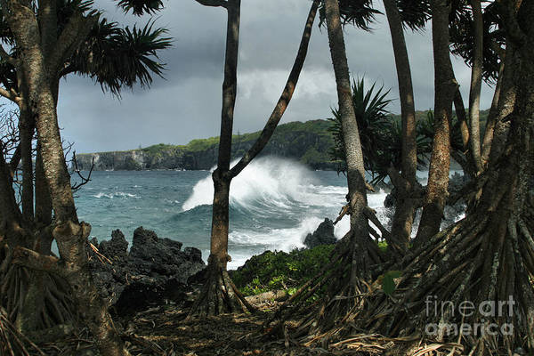 Photograph - Mahama Lauhala Keanae Peninsula Maui Hawaii by Sharon Mau