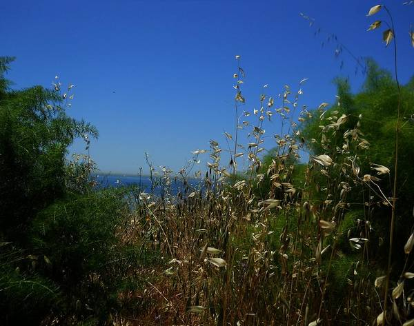 Wall Art - Photograph - Maidenhair Ferns And Grasses On The Bluff by Eve Paludan