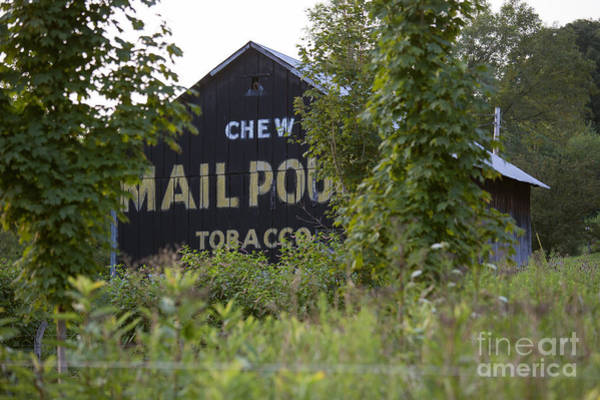 Photograph - Mail Pouch Tobacco by Jim West