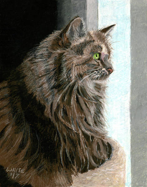 Pastel - Maine Coon Cat In Window by Dominic White
