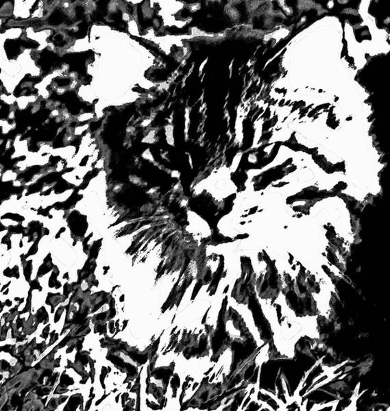 Photograph - Maine Coon by Gina O'Brien