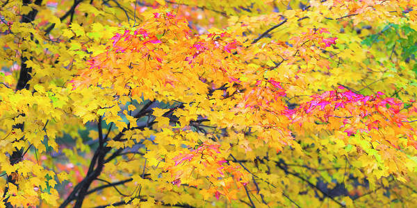 Photograph - Maine Fall Foliage In Autumn by Ranjay Mitra